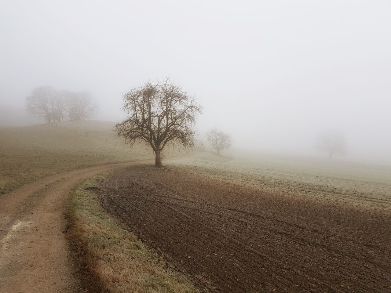 Tranquility Fog Tree Nature No People Bare Tree Beauty In Nature Outdoors