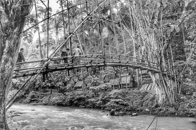 don't cross the bridge till you come to it Forest Tree Tranquil Scene Bridge Connection Tranquility Bridge - Man Made Structure Tree Trunk Non-urban Scene Nature WoodLand Scenics Branch Solitude Outdoors Day Beauty In Nature The Way Forward Footpath Tree Area bamboo Blackandwhite Blackandwhite Photography INDONESIA Indonesia_allshots Baduy forest