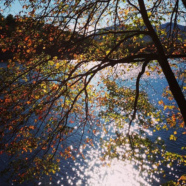 Fall leaves, shimmering lake. Autumn Wnc Autumn Colors