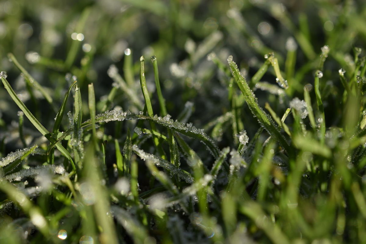 Beauty In Nature Blade Of Grass Close-up Cold Temperature Day Drop Freshness Frozen Dewdrops Frozen Drop Grass Green Color Nature No People Outdoors The Purist (no Edit, No Filter) Wet Winter
