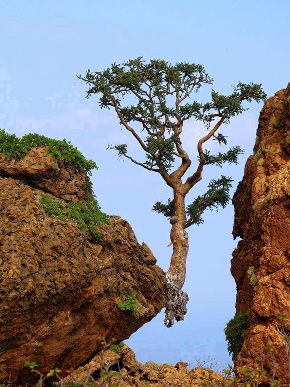 tree, nature, tranquility, rock - object, beauty in nature, tranquil scene, rock formation, day, scenics, outdoors, no people, sky, low angle view, tree trunk, cliff, growth, mountain, water