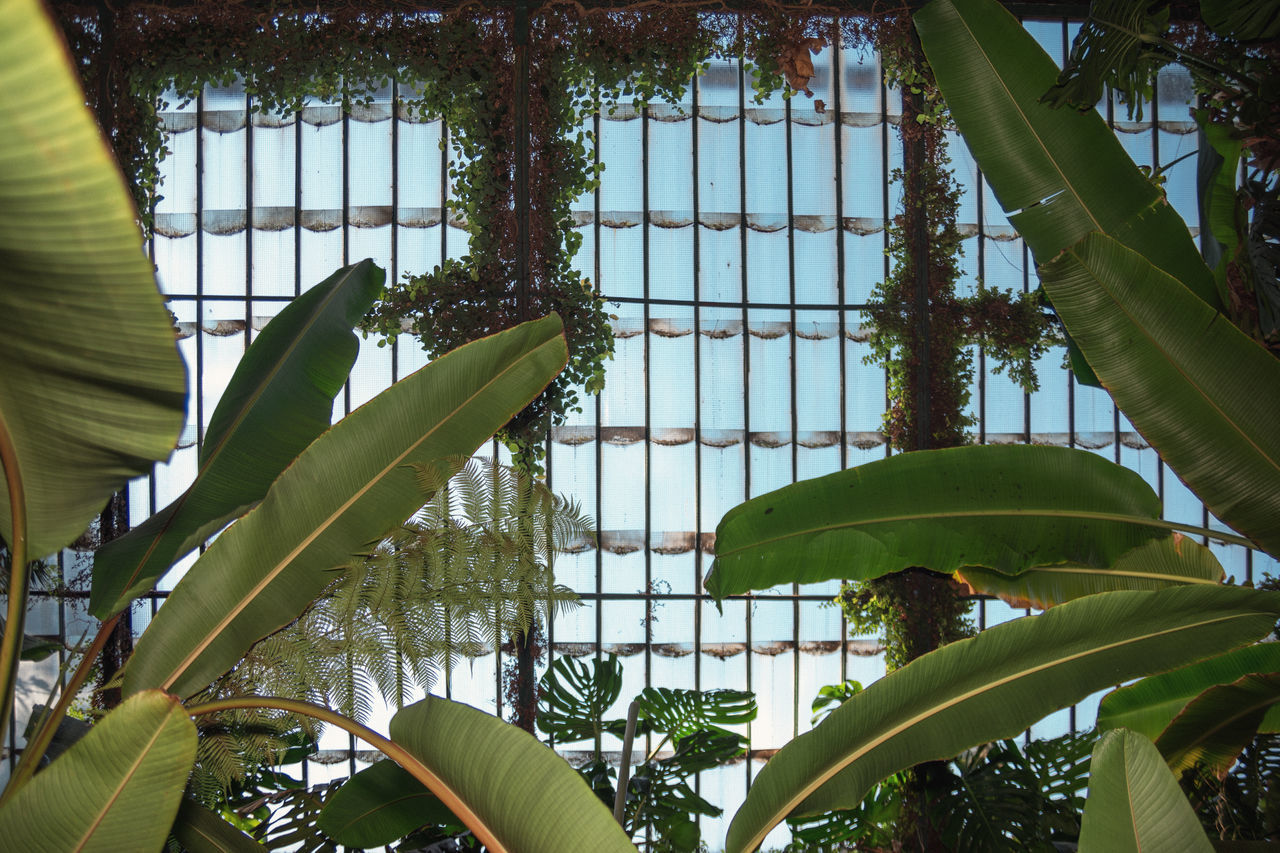 Look Up Blue Sky Cyan Garden Glass Green Greenhouse Growing Linas Was Here Nature Palm Leaves Park Roof Teal