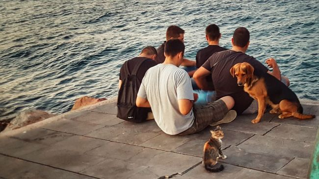Friendship Cats And Dogs From Where I Stand Capture The Moment Golden Hour Port Life Just Around The Corner Friends Cat Dog People From My Point Of View Lifeisbeautiful People Photography Just Chillin' City Life Youth Of Today Young Men Real People By The Sea People Together - Greek Islands