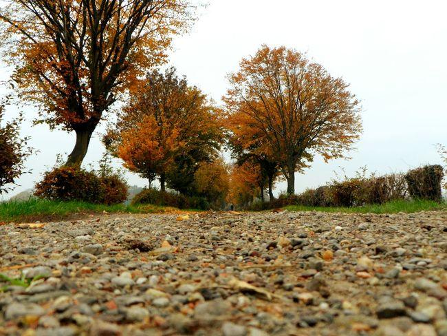 Autumn Leaves Taking Photos Photography Photographer First Eyeem Photo