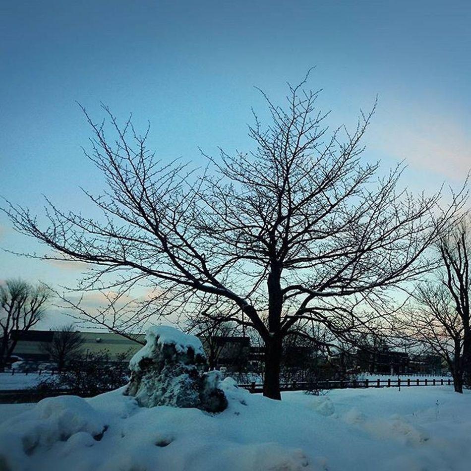 なおphoto 実家近く 桜の木 今年もキレイに咲きますように……🌸