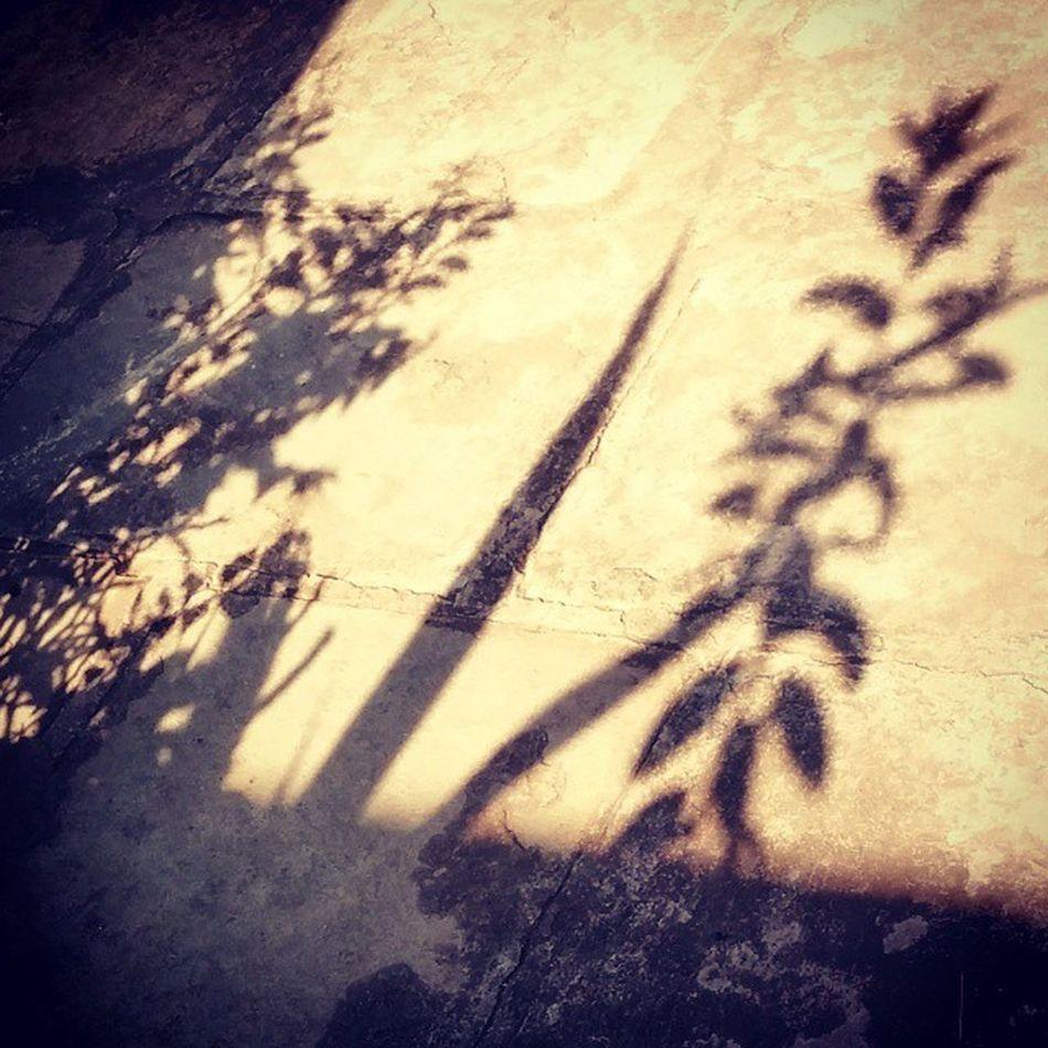 Shadow Plants Homegarden Containergarden Instagardenlover Morning Sunlight