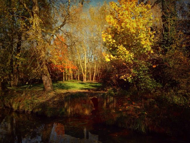 I GLADE 2 MEET U I Stenkas Colored World Nature Nature Lover Nature Photography Nature_collection EyeEm Nature Lover Tree Trees Glade Autumn Fall River and also Hello World Check This Out Taking Photos EyeEm EyeEm Best Shots Have a nice day my friends !