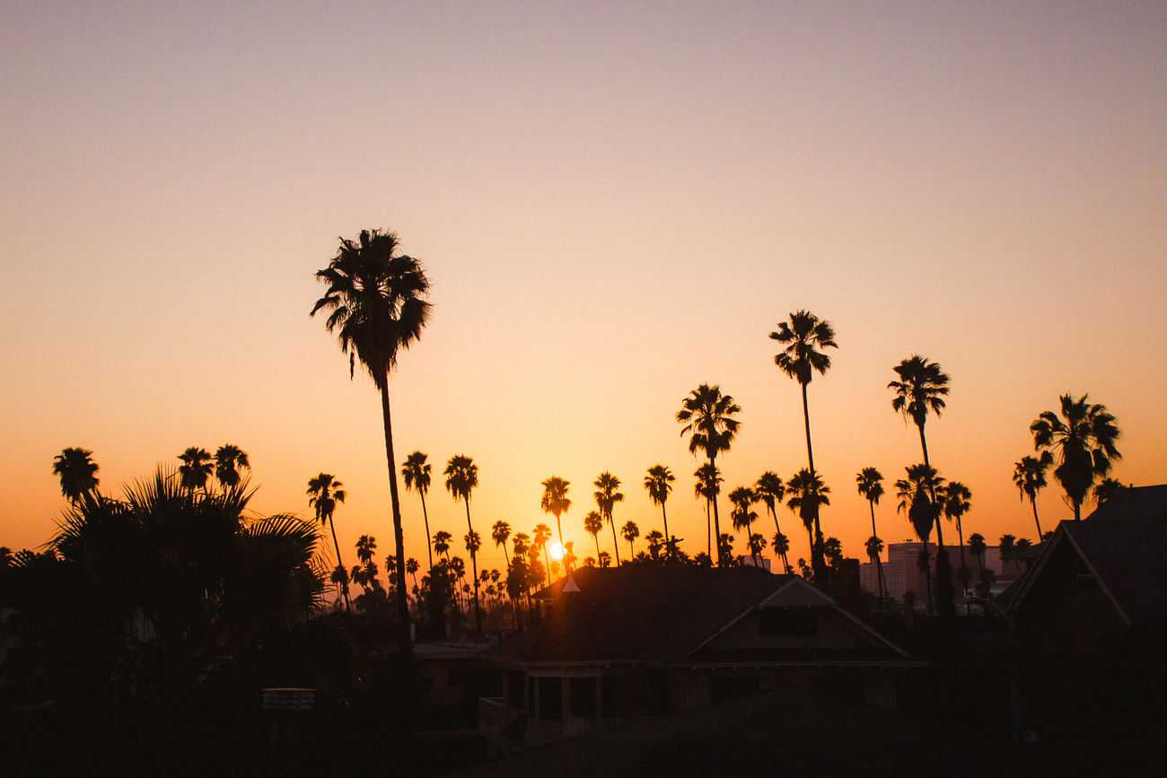 For bookings: 4thandspring@gmail.com www.4thandspring.com Beauty In Nature Clear Sky Los Angeles, California Nature No People Outdoors Palm Tree Scenics Silhouette Sky Sunset Tranquil Scene