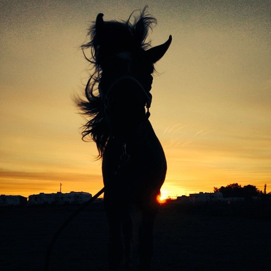 I whip my hair back and forth. Sillygirl Silhouette Ruethemustang Sunsetsarethebest whipmyhairbackandforthcutielovehermustangwildmustang