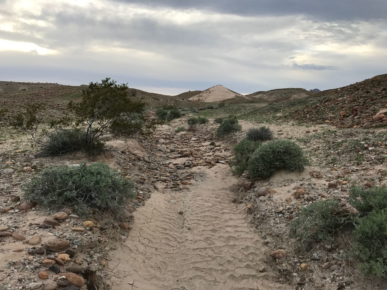 Nature Desert Arid Climate Landscape Outdoors Tranquil Scene Tranquility Sky Beauty In Nature Day Scenics Cloud - Sky Remote Sand Growth Plant Sand Dune No People No Filter, No Edit, Just Photography Dry Wash Desert Landscape Beauty In Nature