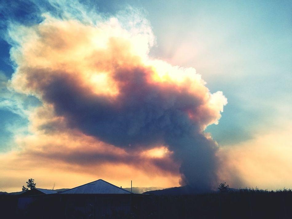 Forest Fire Palmilla