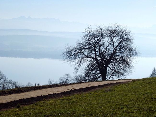 Foggy walks 🌬 Switzerland Murten Hill Mountains View Foggy Foggy Morning Water Water Reflections Sea And Sky Sky And Clouds Sky Home Taking Photos Hello World Relaxing EyeEm Best Shots EyeEm Nature Lover First Eyeem Photo Nature Heimat Tree Contrast Silhouette