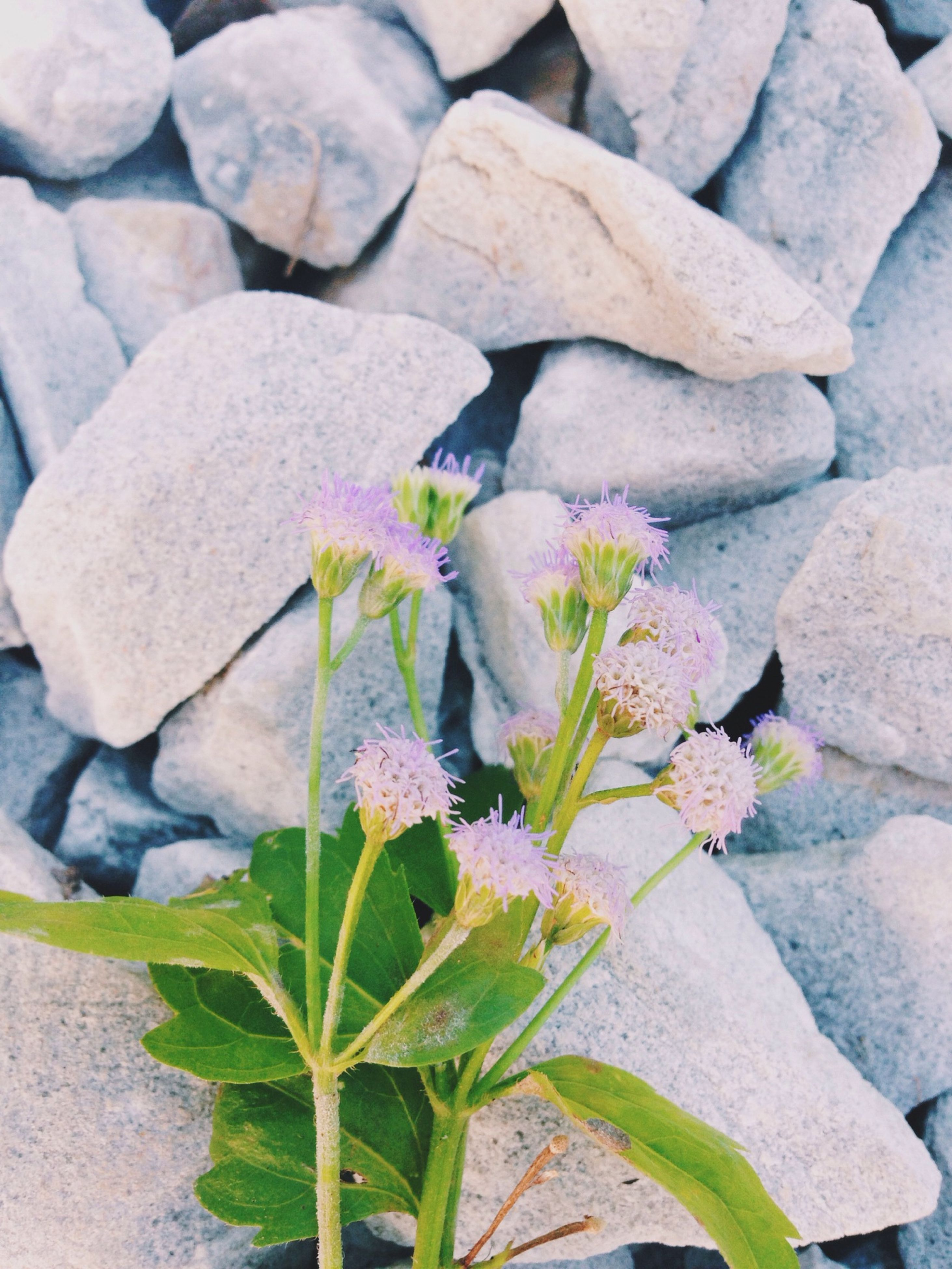 growth, plant, leaf, nature, flower, cactus, freshness, beauty in nature, close-up, fragility, growing, day, abundance, high angle view, outdoors, field, green color, tranquility, no people, rock - object