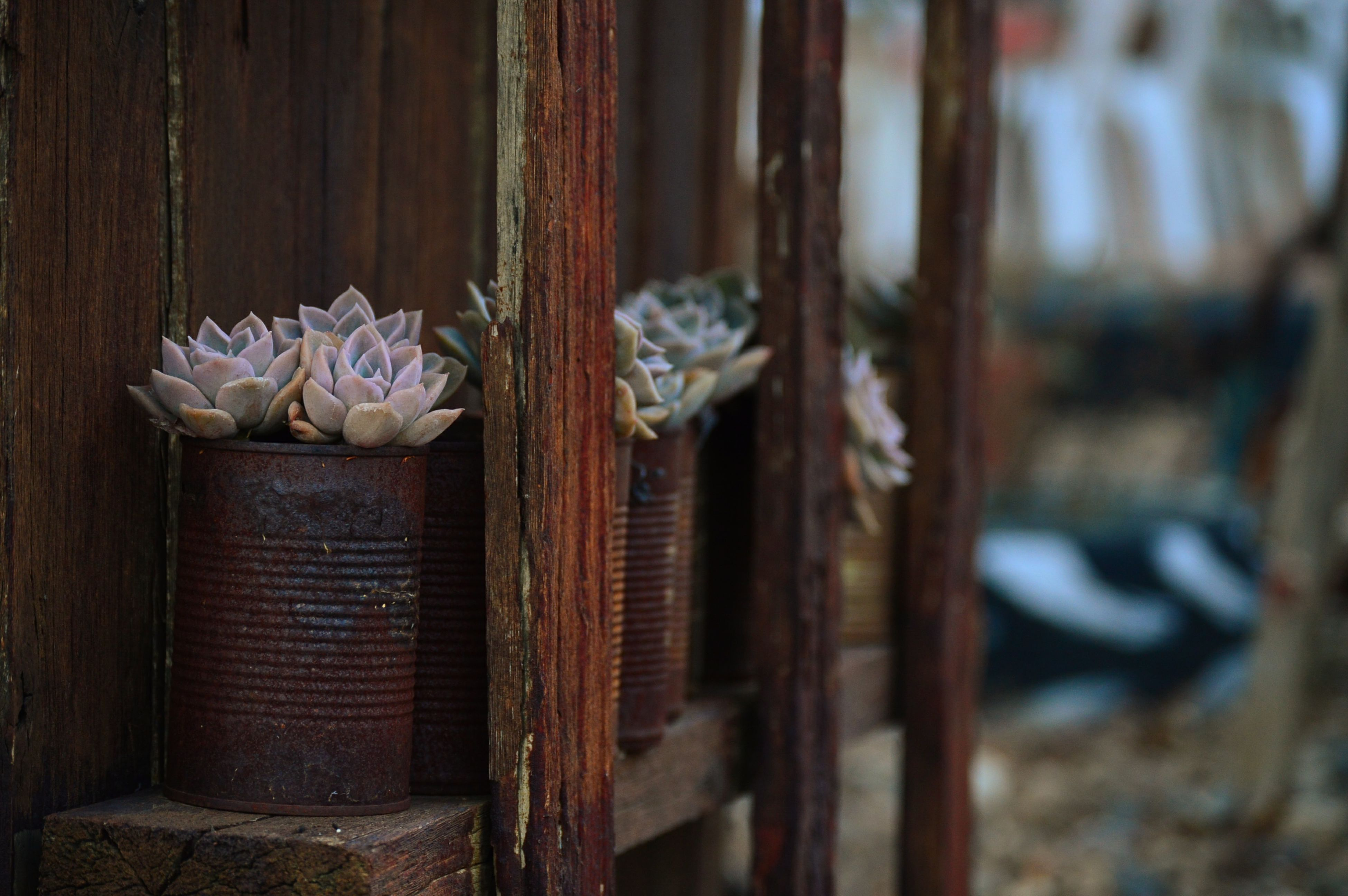 flower, wood - material, close-up, fragility, white color, wooden, focus on foreground, nature, growth, no people, day, petal, plant, wall - building feature, outdoors, stem, selective focus, fence, beauty in nature, built structure