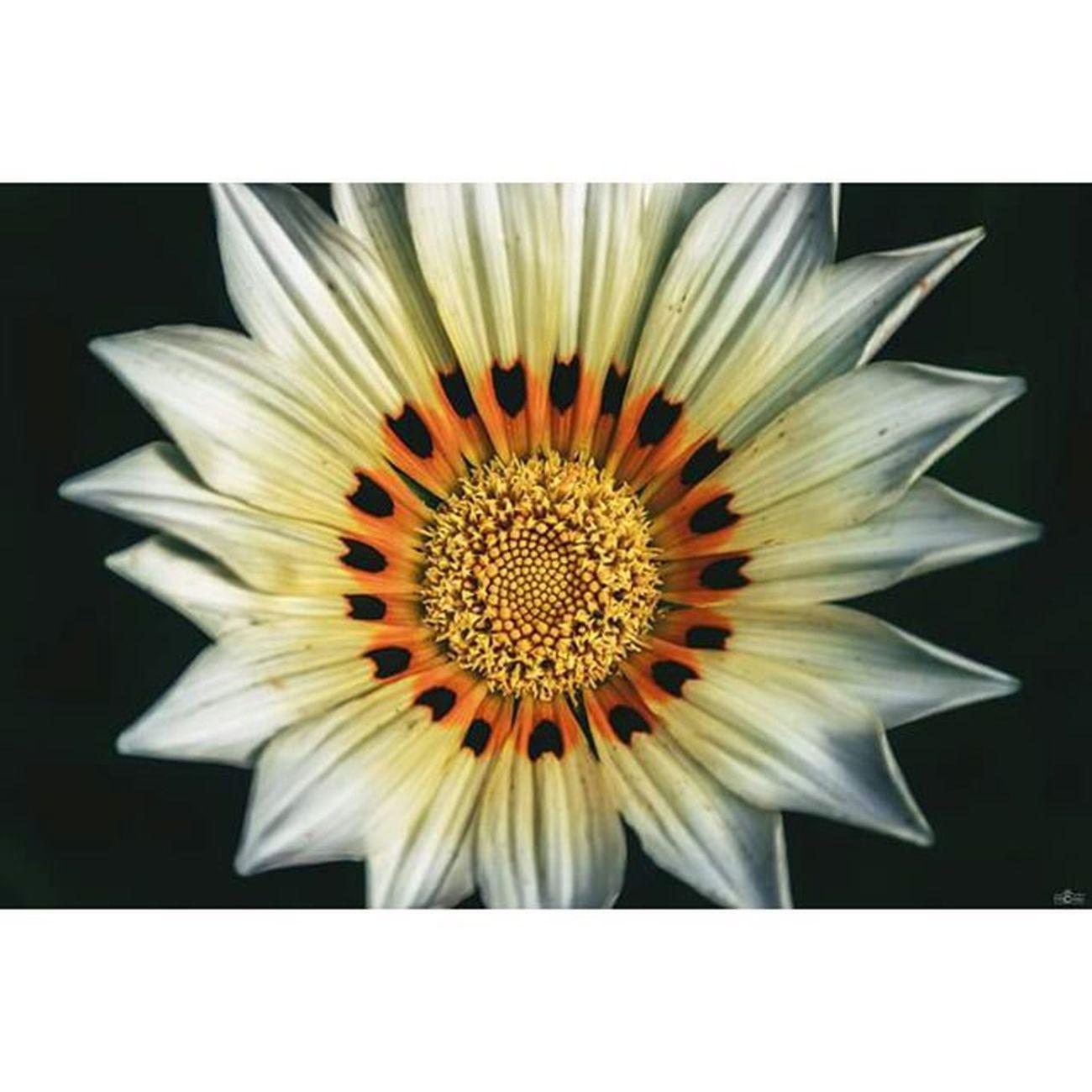 Flower Makrophotography Makros Makro Michaellangerfotografie Lovethispicture Fotografie Photography Photographyislife CripixtMovement Earthshoot