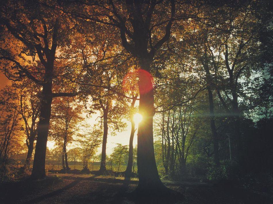 Golden Light Landscape Autumn Nature Magic