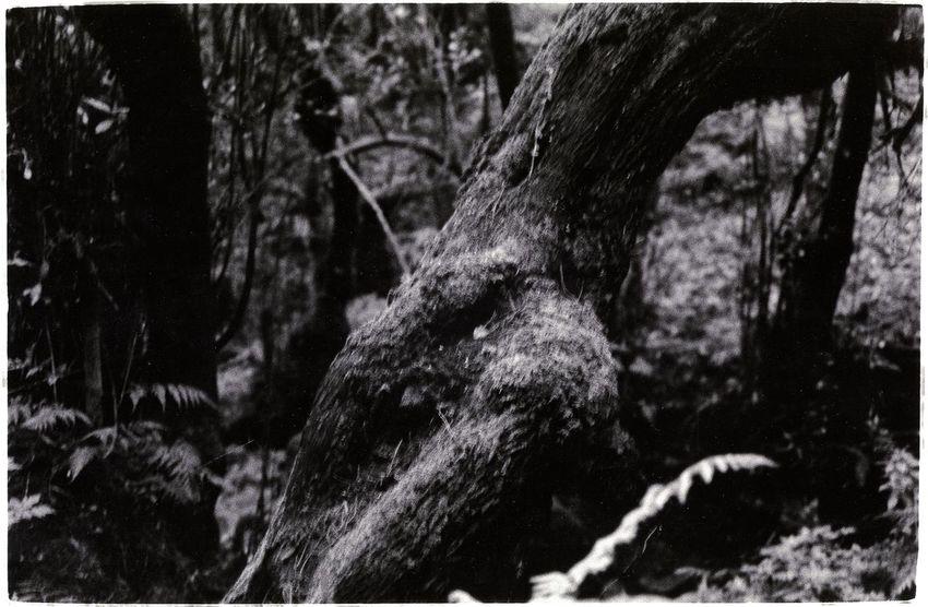 Forest LaGomeraIsland Wildlife & Nature Blackandwhite Blackandwhite Photography Forest Rainforest Tweda Wonderwood