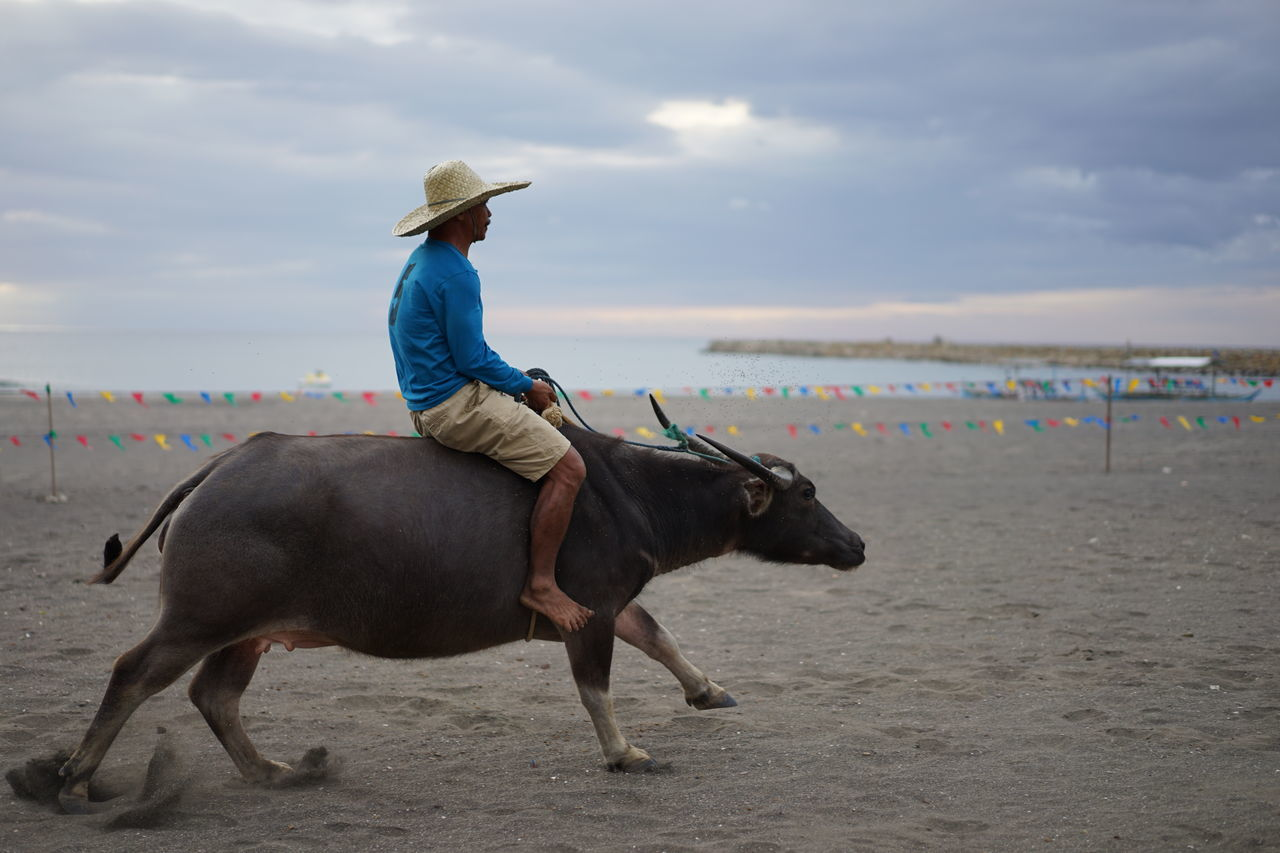horse, domestic animals, horseback riding, one person, real people, livestock, one animal, full length, beach, riding, mammal, sand, sky, sea, nature, leisure activity, lifestyles, outdoors, cloud - sky, day, scenics, water, horizon over water, beauty in nature, women, adult, people