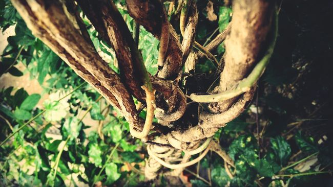 Oneplusone Mobile Photography Color Os HDcamera Roots Showcase March Showing Imperfection Nature's Diversities