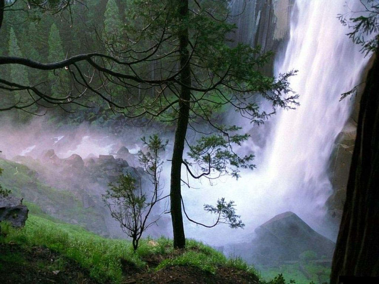 tree, nature, beauty in nature, scenics, tranquil scene, fog, mountain, tranquility, waterfall, no people, forest, day, landscape, growth, power in nature, outdoors, branch, sky