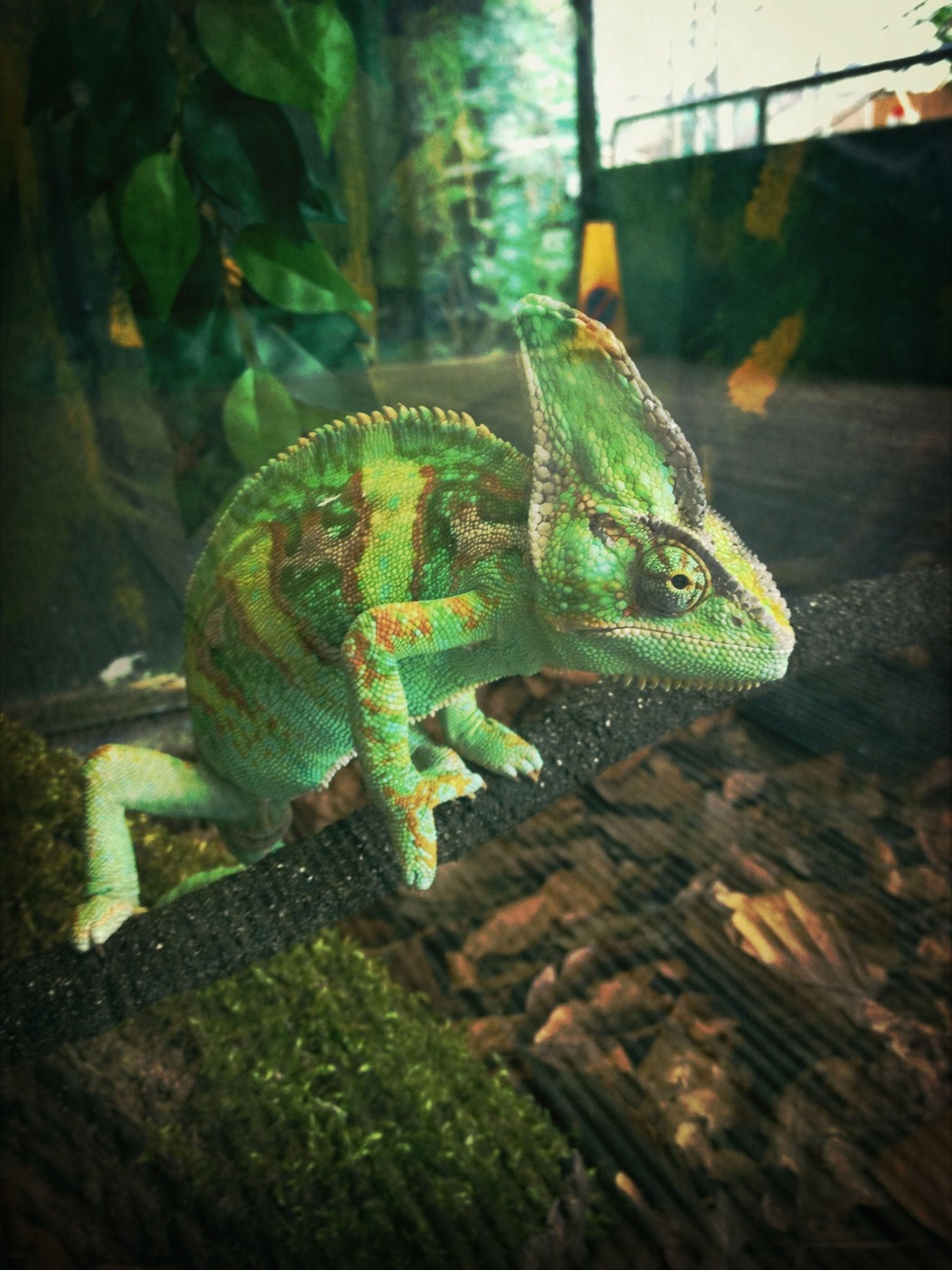 Little Green Friend