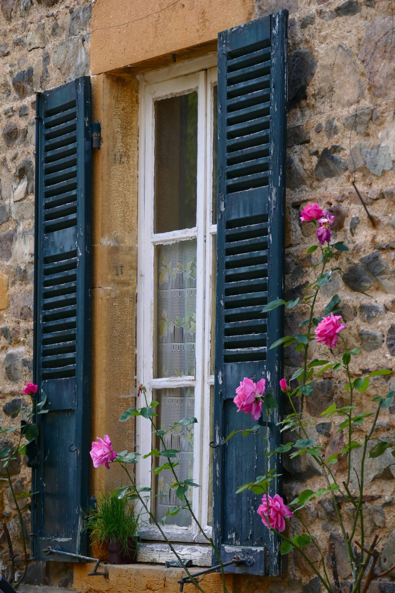 Beautiful stock photos of house, Close-Up, Day, Flower, France