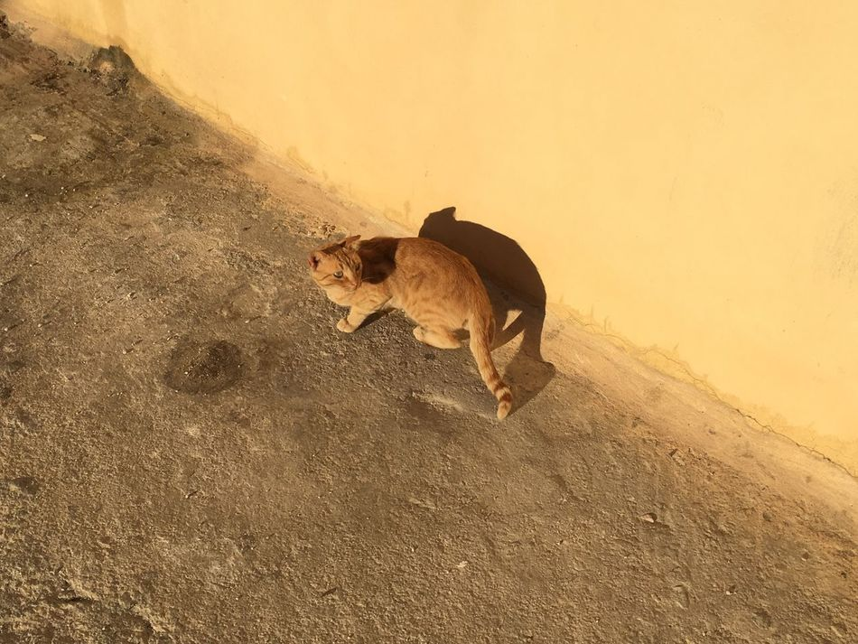 Cat Cast A Shadow in front of a Yellow Wall - Color Palette Mediterranean  Streetphotography