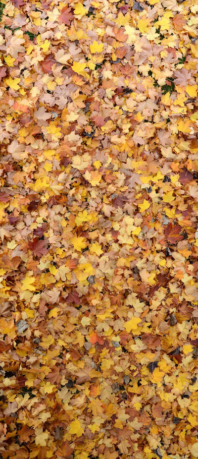 Autumn Colours Autumn Leaves Full Frame Large Group Of Objects Leaf Carpet Leaves On The Ground Shades Of Nature
