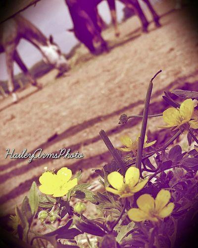 Inspiration EyeEm Best Shots Summer Nature