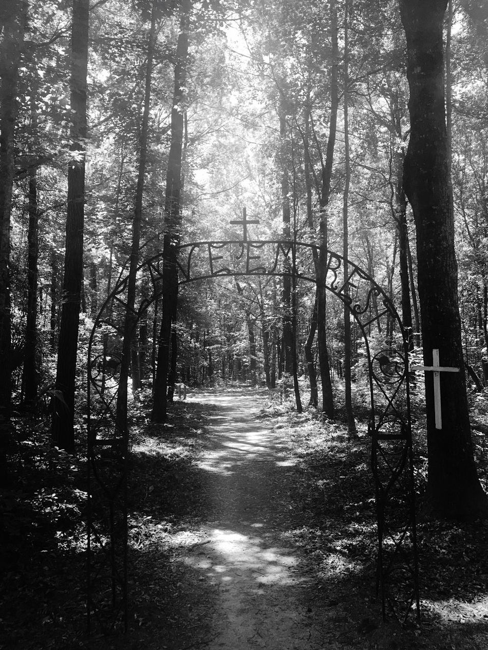 """Leave 'Em Rest"" - Drayton Hall Plantation Blackandwhite South Carolina Black And White Antebellum Plantation"