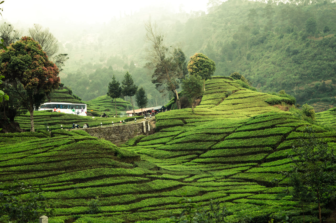 Beauty In Nature First Eyeem Photo Green Color Growth Nature Nature Photography The Great Outdoors - 2017 EyeEm Awards Day Landscapes Scenics Tranquility Travel Freshness Outdoor Sky Outdoors Hill Agriculture Field Tea Tea Plantation  Tea Plantations