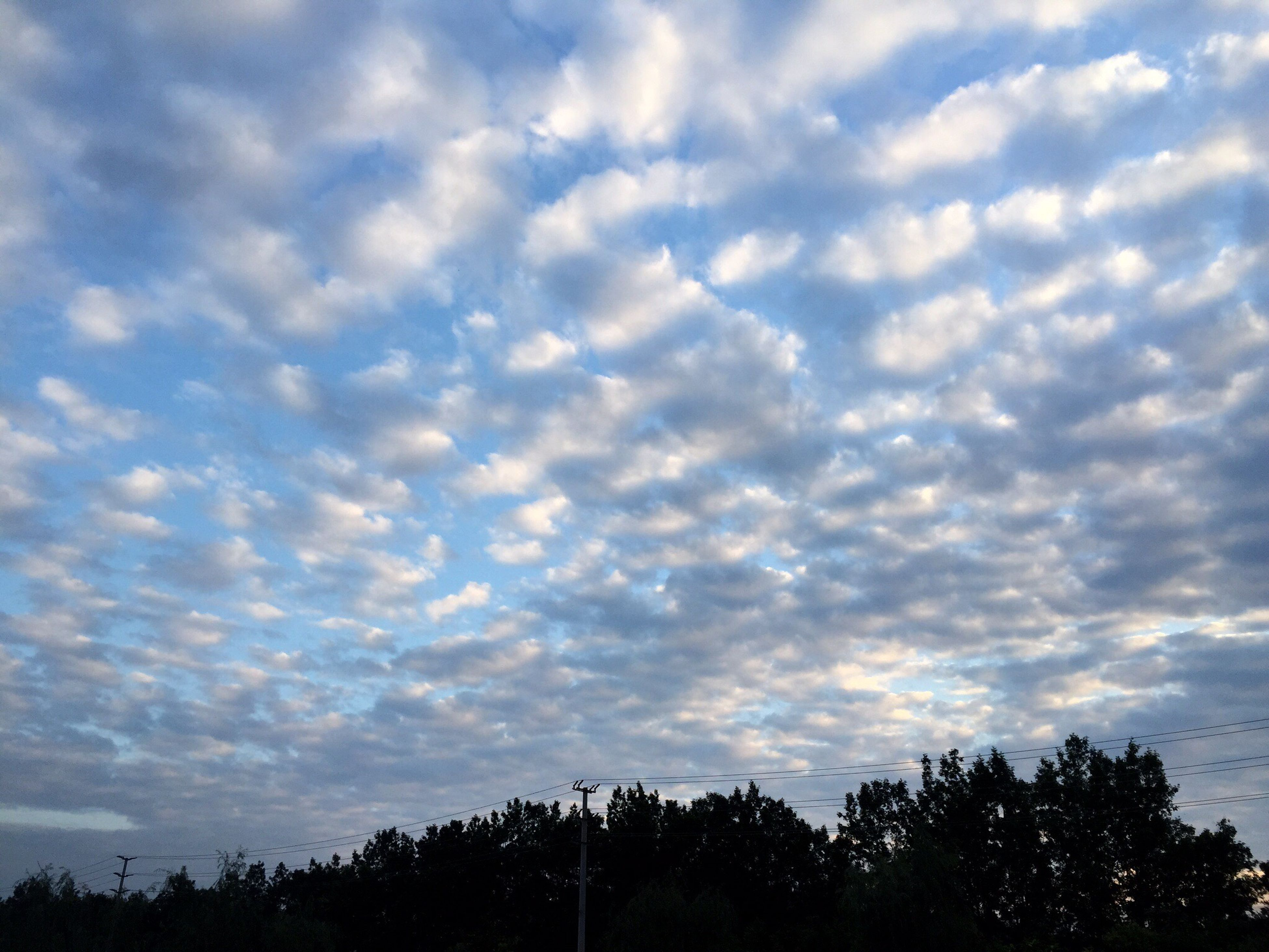 sky, tree, cloud - sky, low angle view, silhouette, tranquility, cloudy, beauty in nature, scenics, tranquil scene, nature, cloud, weather, overcast, idyllic, growth, cloudscape, dramatic sky, outdoors, no people