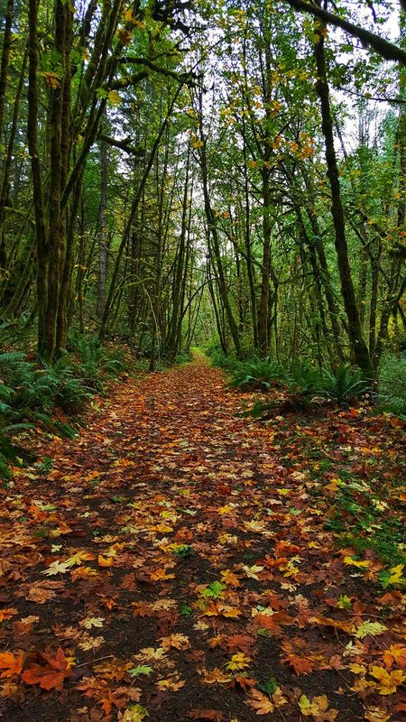 Oregon Autumn PNW Pretty Hiking Fall Hikes Forest