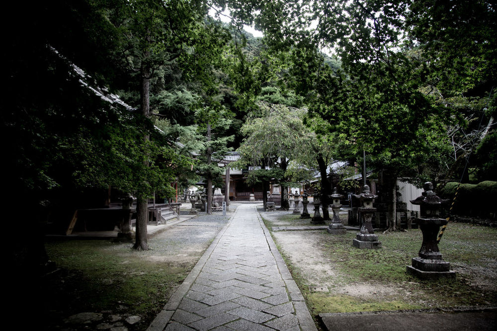 Day Forest Green Growth Japan Japan Photography Japanese Architecture No People Outdoors Shrine Temple Travel Travel Destinations Travel Photography Tree OSAKA