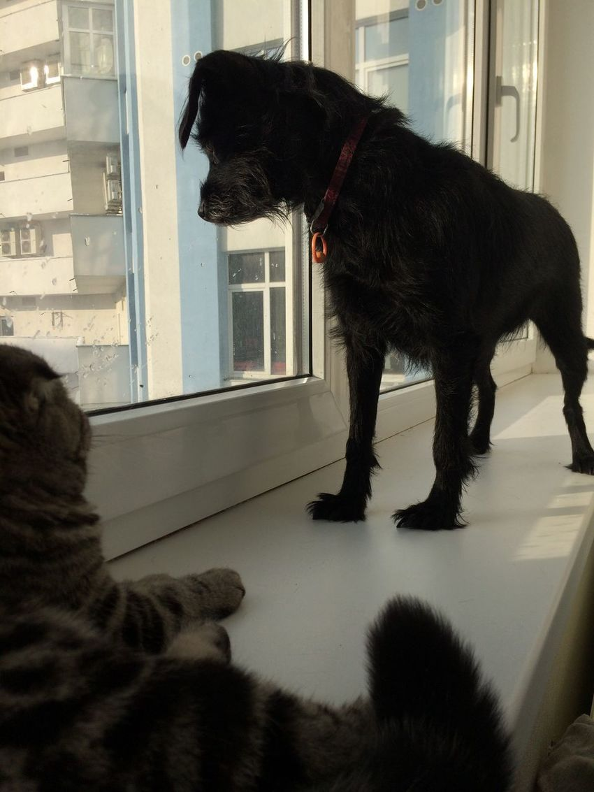 Pets Domestic Animals One Animal Animal Themes Dog Looking Through Window At Home (null) Colour Of Life Enjoying Life Ucraina 🇺🇦 Colors Of Life I LIKE👍EyeEm😃👍 Emotions Sky Blue I Love It ❤ I❤️photography I❤️animals