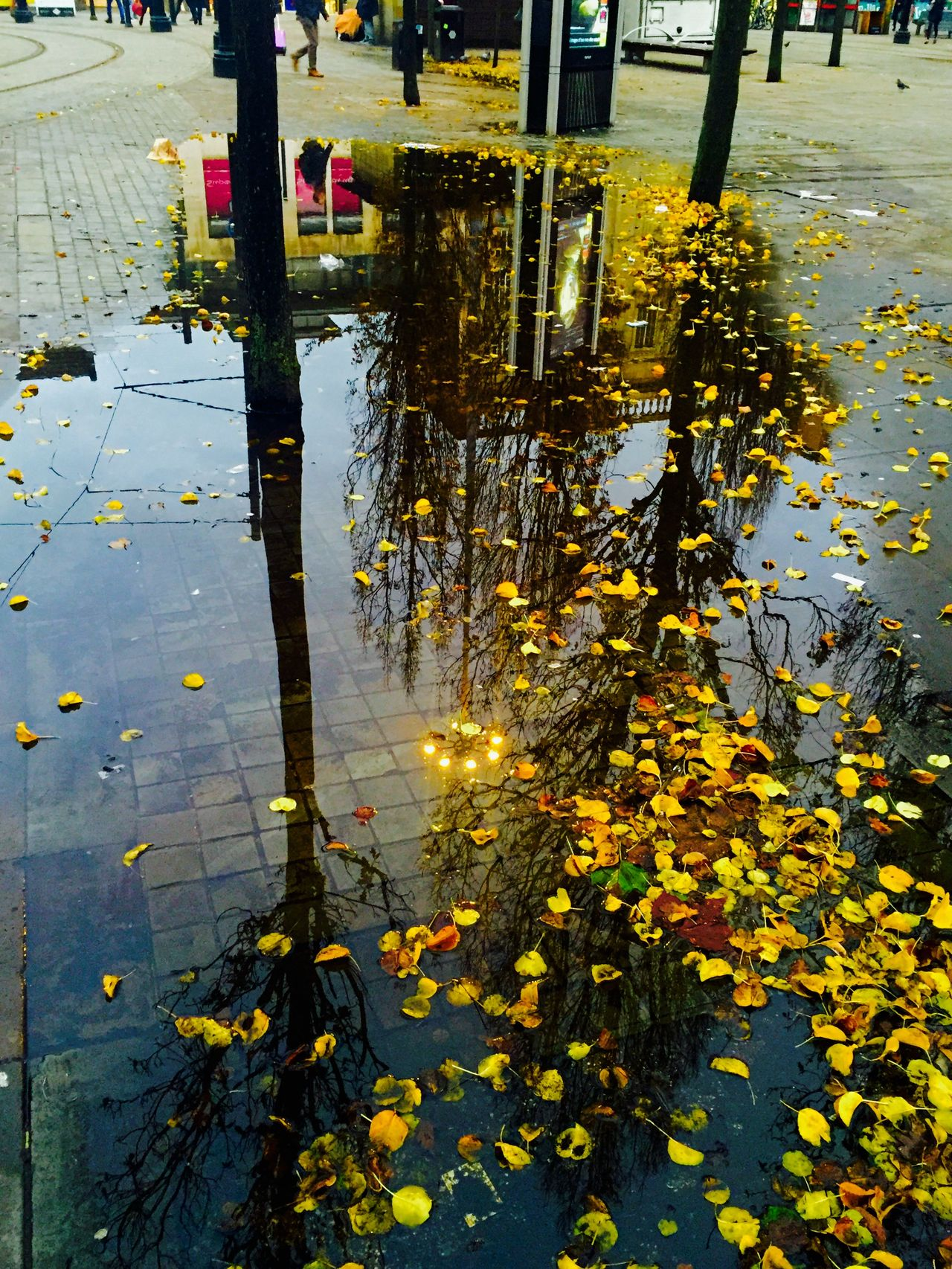 Giant puddle in Piccidilly Gardens Manchester. Giant Puddle Puddle Reflections Reflection Water Reflections City Center