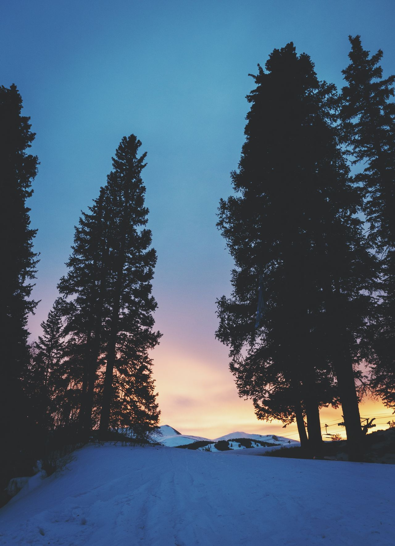 Tree Beauty In Nature Nature Tranquility Tranquil Scene Sky Scenics Snow Outdoors Low Angle View Winter Cold Temperature Growth No People Clear Sky Day Landscape