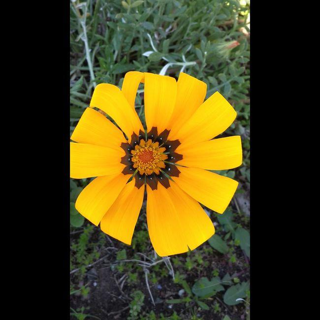 Flowerporn Nature_collection Weneedamiracle Lostsouls