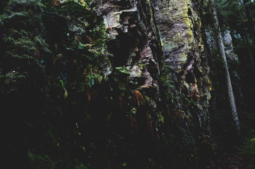 explore /: black forest 2016 Nature Tree Growth Forest Beauty In Nature No People Outdoors Scenics Day Rock Beauty In Nature Environment