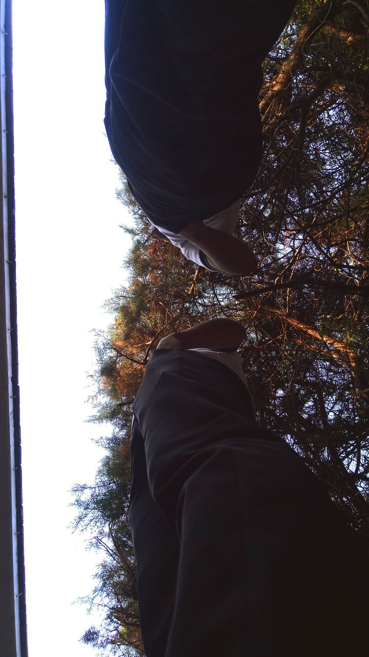 real people, rear view, tree, one person, low angle view, men, lifestyles, day, standing, leisure activity, nature, sky, outdoors, beauty in nature, clear sky, close-up, people