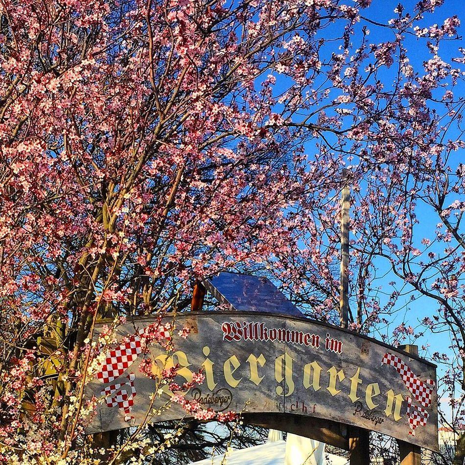 Biergarten Worthy Sunny Day