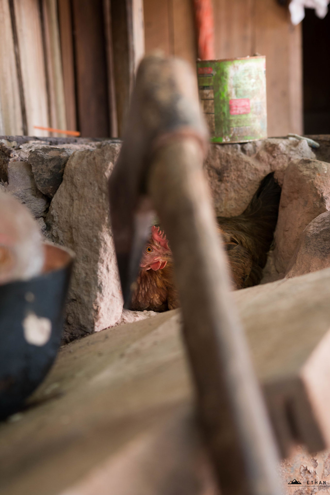 Impending death... Axe Chic Chicken Day Fragility Hen Person Plank Product Photography Rooster Selective Focus Surface Level