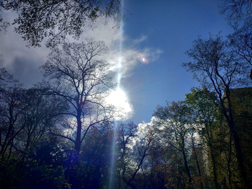 Low Angle View Tree Sky Nature No People Outdoors Day Beauty In Nature Sun Sunlight Turmstrasse Park Tranquility Tree Tranquil Scene Scenics Freshness
