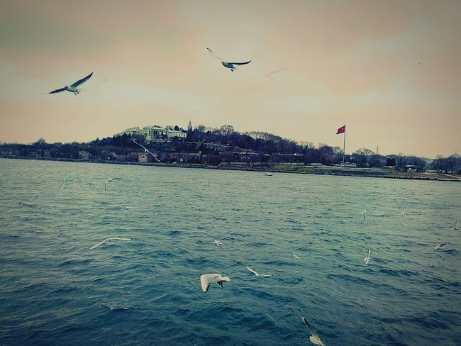 HDR Seagull Bosphorus Istanbul Turkey Nature Streetphotography Sea And Sky Photography Martı Boğaz Taking Photos Topkapi Landscape Manzara