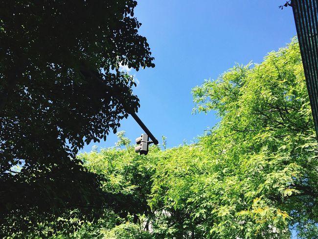 Nature Urban Natureza Urbano São Paulo São Paulo Green And Gray Verde E Cinza