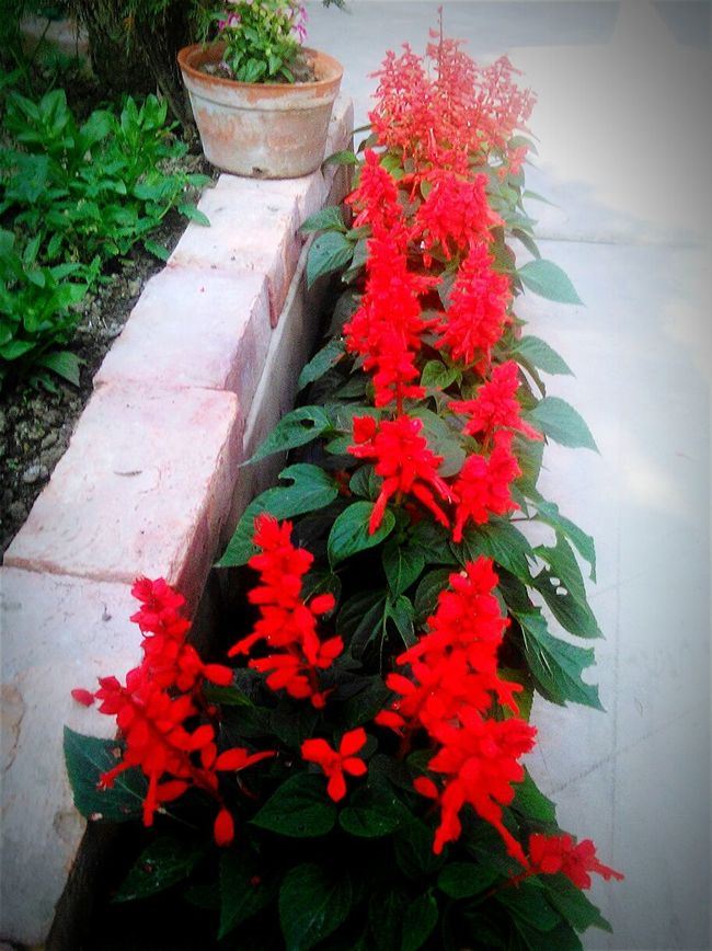 My Favorite Place My Garden @my Home Freshness Flower Plant Red In Bloom Springtime Bunch Of Flowers Blossom Beauty In Nature