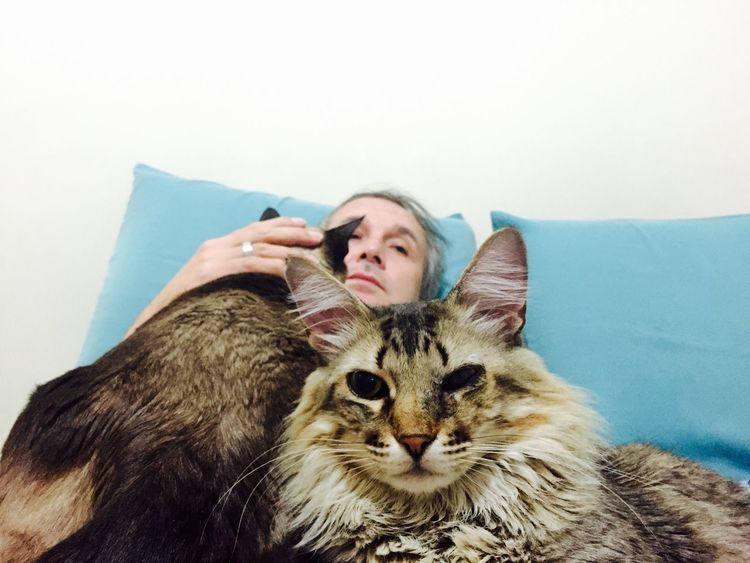 Cats Hi! Hello World Brasil ♥ That's Me Enjoying Life Lovecats❤️ I Love My Cat I Love My Cats  Cat♡