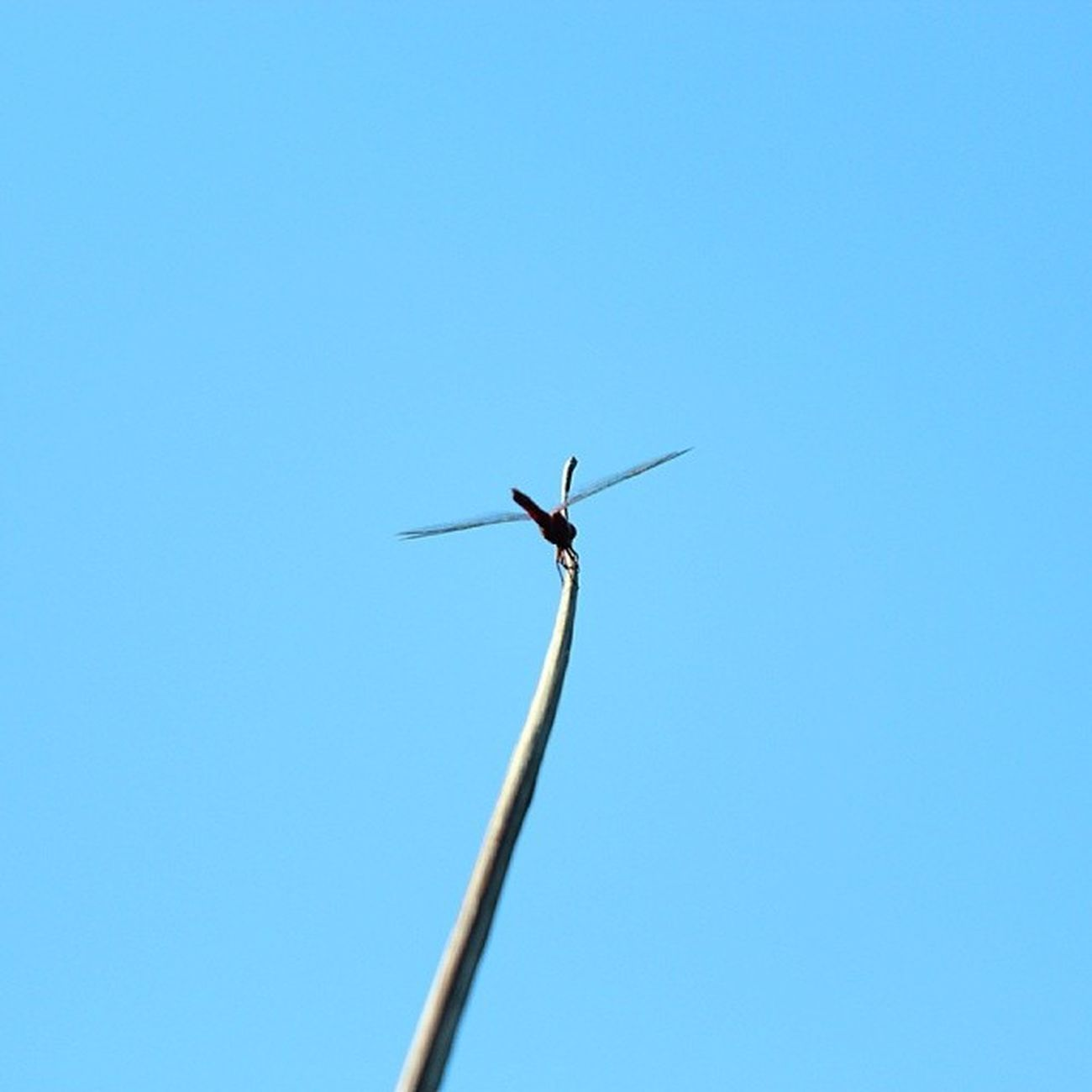 Dragonfly! MacroLadilla