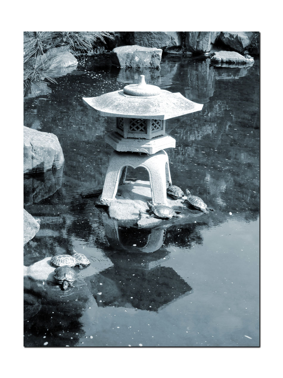 Turtles in a Pond 2 Red-eared Slider Testudines Emydidae SemiAquatic Reptilia Pond Hayward Japanese Tea Garden Water Rocks Bnw_friday_eyeemchallenge Turtles Garden Japanese Lantern Monochrome Blue Monotone Reflections Reflections In The Water Reflected Glory Most Popular Pet Turtle In U.S. Black & White Black And White Photography Black And White Black And White Collection  Listed As Invasive Species