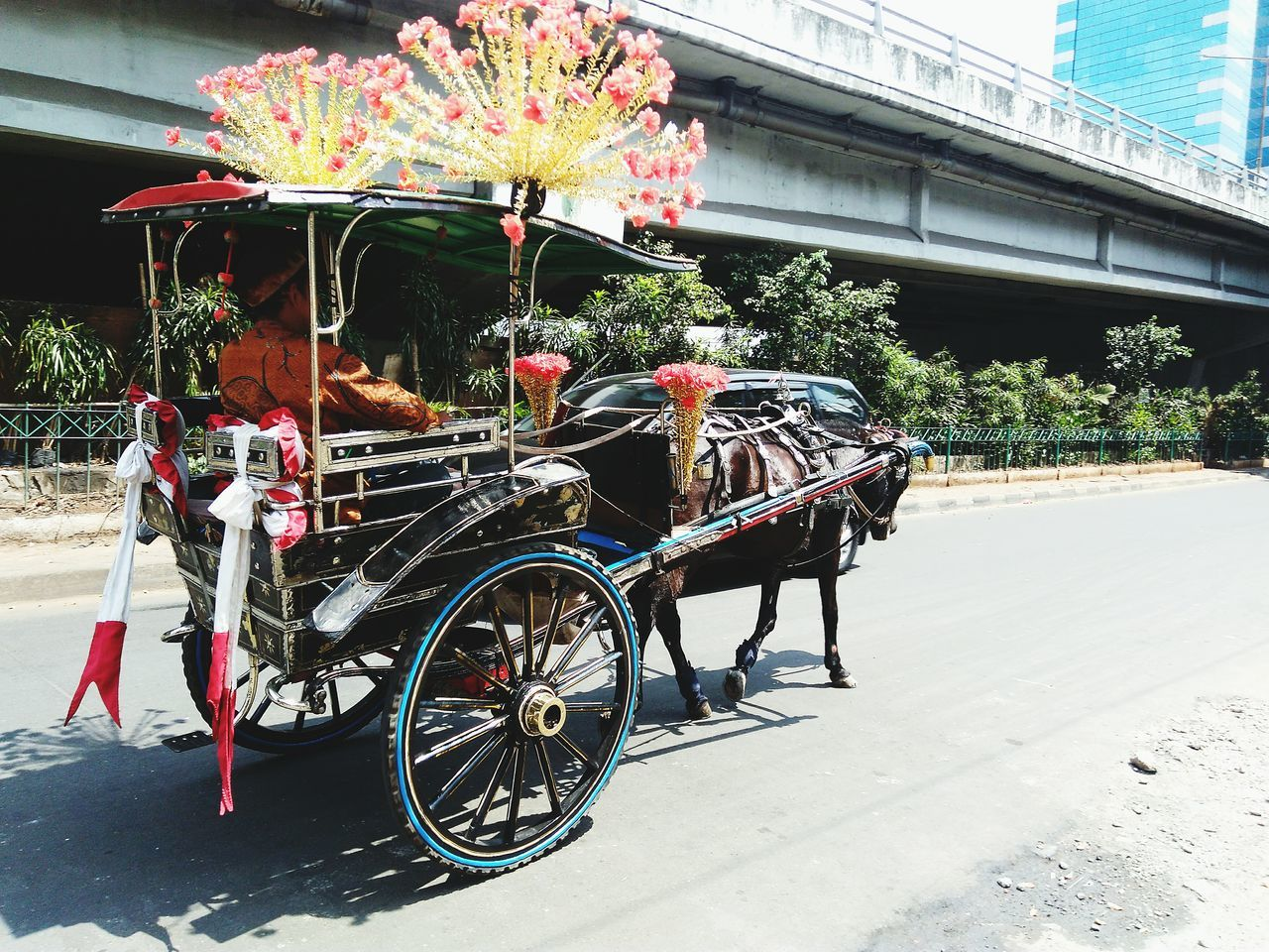 Transportation Delman Holidays ☀ Street Life Streetphoto Street Photograpy Horse And Carriage
